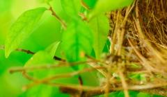 Vajíčka z přírody
